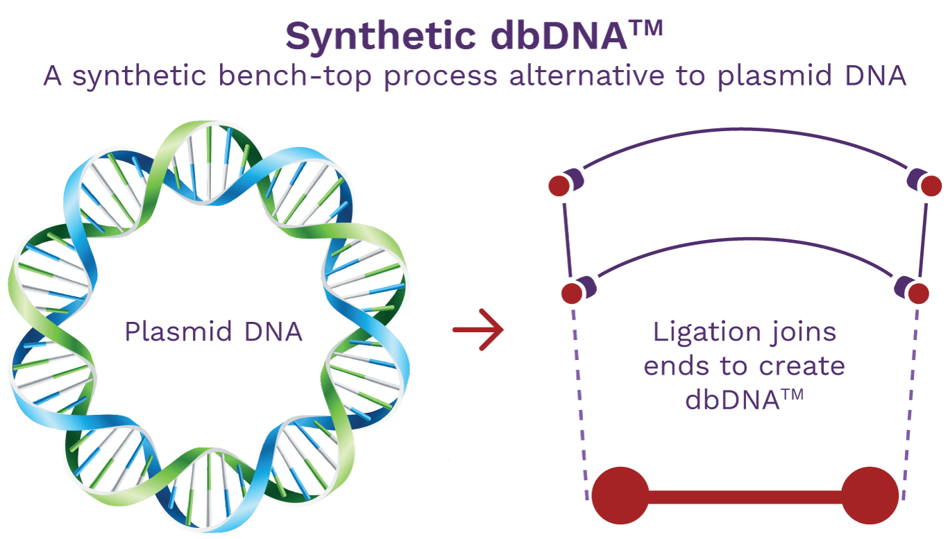 Touchlight synthetic doggybone DNA is a synthetic bench-top process alternative to plasmid DNA.