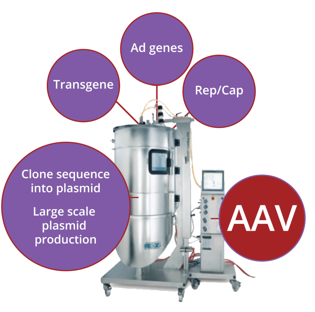 AAVPlatform proven end-to-end capability results in technology to increase scale and lower costs of goods as well as translate into clinic faster, safer and with greater predictability.