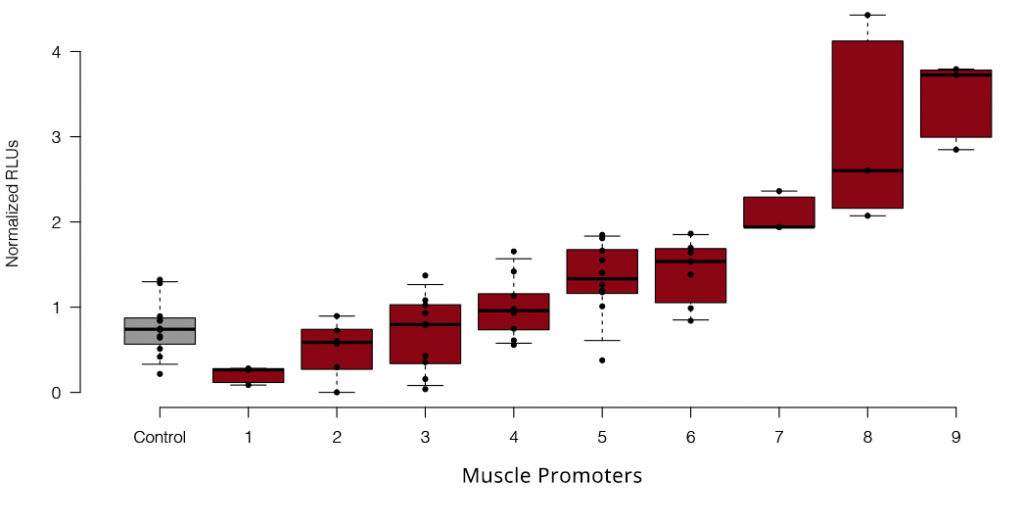 Muscle Promoters Box Plot Graph
